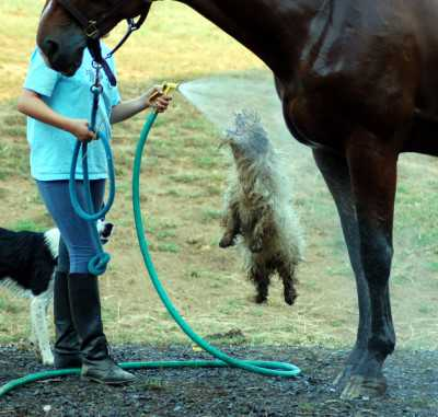 Horses and students -- and the resident farm dogs -- learn to love life at Hunter's Rest. Everything revolves around fun.